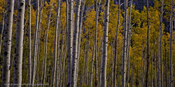 Independence Pass, Aspen, Colorado, Fall, Color