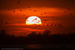 Sunset Decent