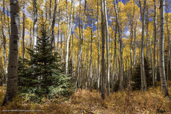 Mount Sneffels Wilderness, Uncompahgre National Forest, Colorado, fall, asepn