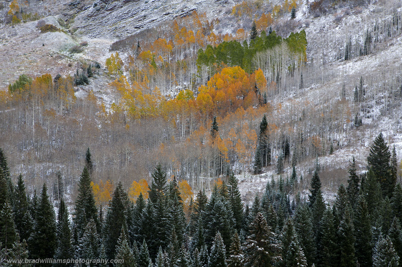 ​Elk Mountains, White River National Forest, Colorado​, Aspen, fall, mountains,, photo