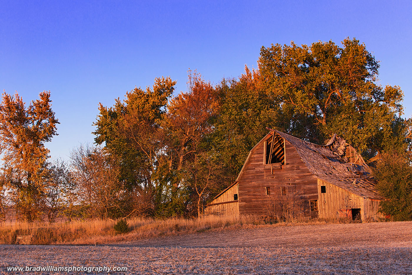 Catching the last rays of the day as it has for nearly a century, this old barn near Brock is only standing because its still...
