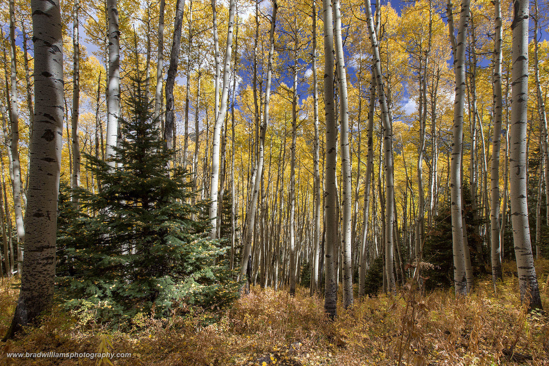 Mount Sneffels Wilderness, Uncompahgre National Forest, Colorado, fall, asepn, photo