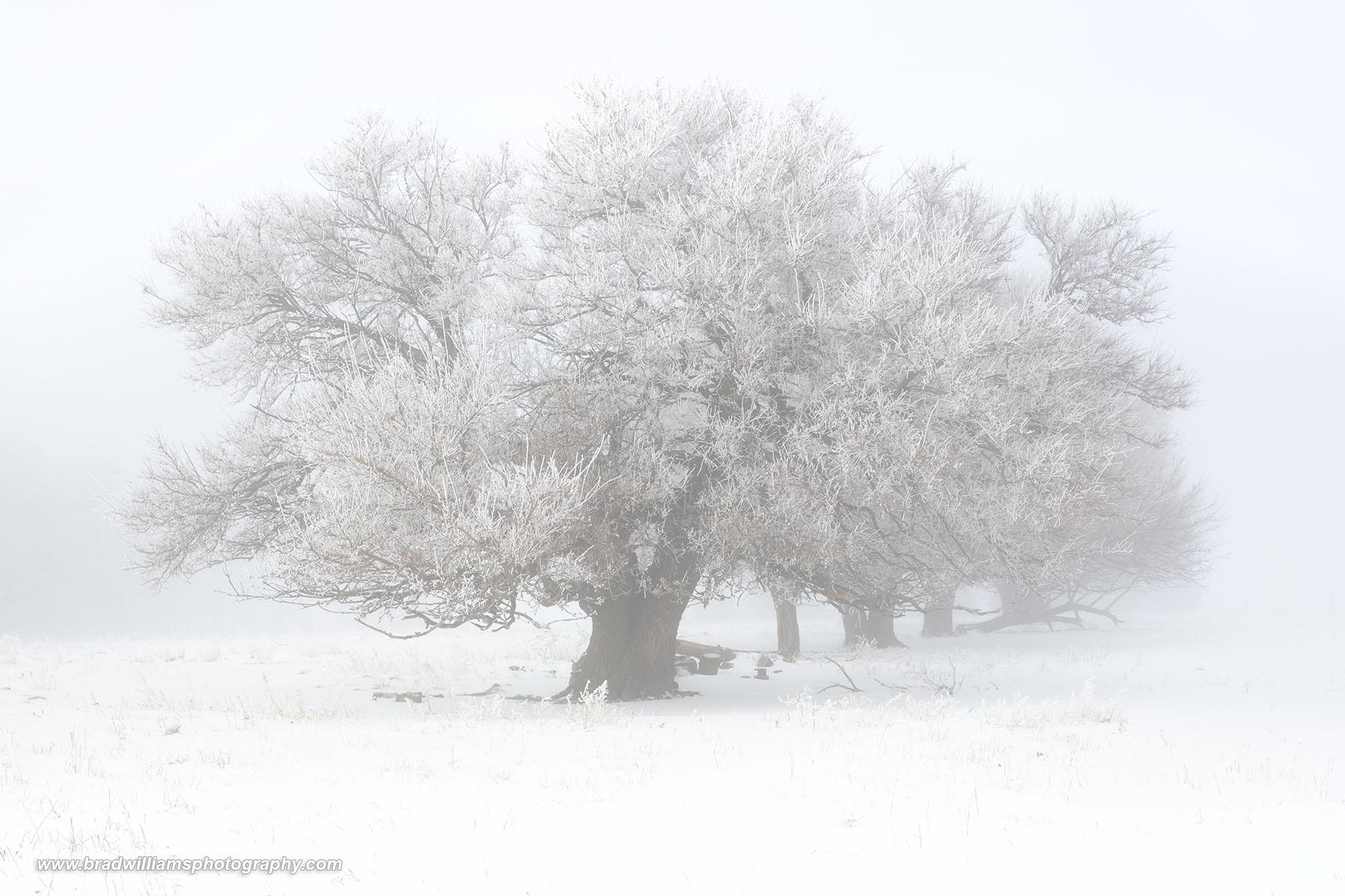 Nebraska, Fog, landscape, snow, photo