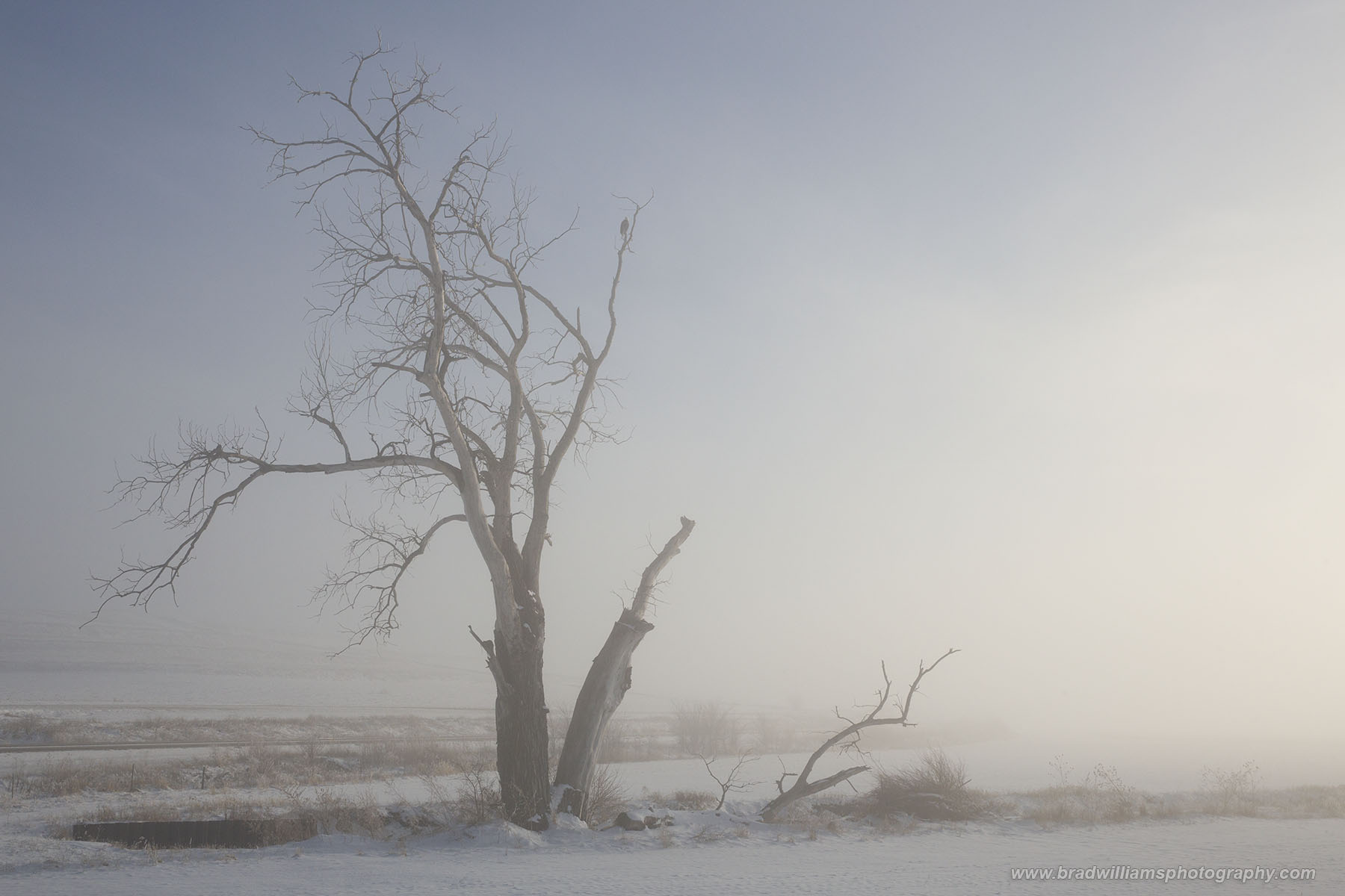 Nebraska, Fog, landscape, snow, photo